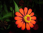 Title: Red flower