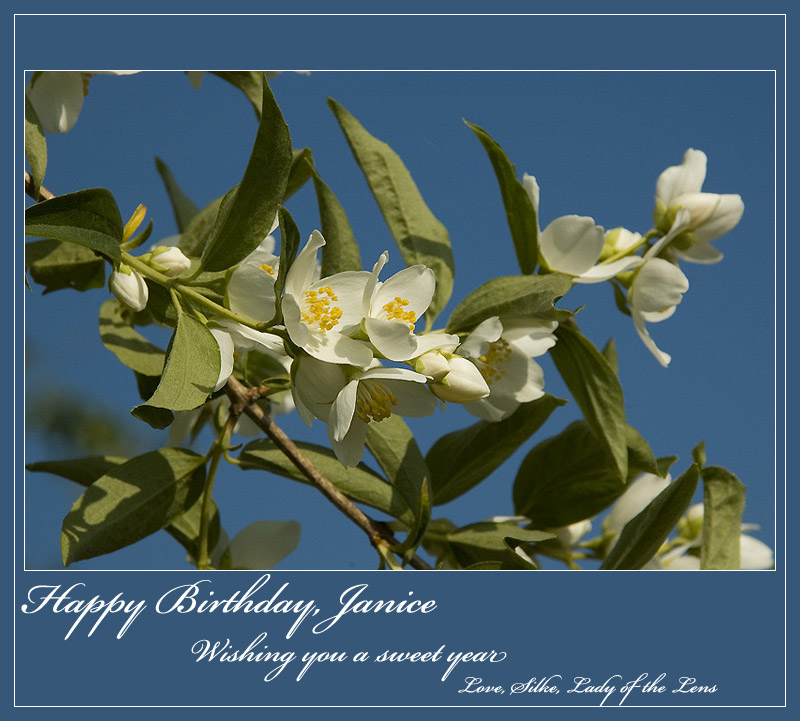 Wishing You a Sweet Year, Janice & Dawn