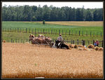 Title: Harvest TimeNikon Coolpix 5700
