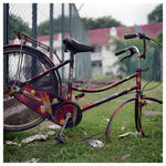 Title: stripped Camera: Hasselblad 500c/m