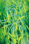 Title: the green...