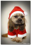 Title: happy doggy ChristmasD2XS