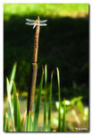 Title: Dragonfly IINikon D200 with MBD200