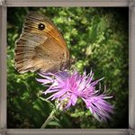 Title: Butterfly and pink flower