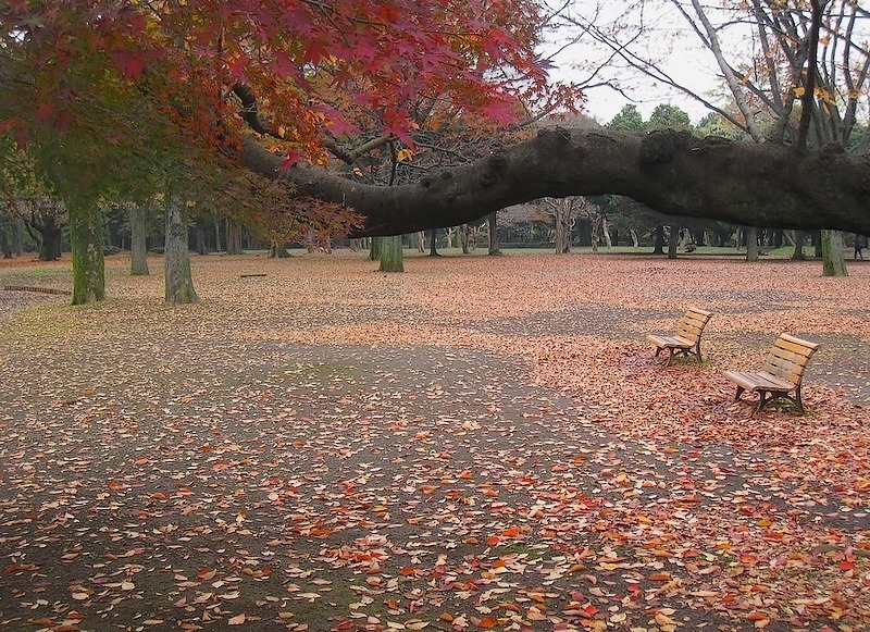 The tranquility in late autumn