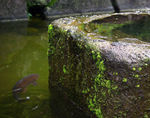 Title: The moss on stonePentax K10D