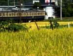 Title: Train passing rice-producing areaPentax K10D