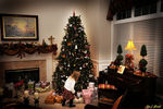 Title: CHRISTMAS ANTICIPATIONNikon D300 DSLR