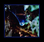 Title: Water in a web