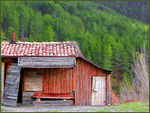 Title: Hut and Forest