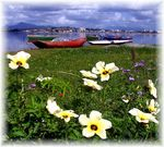 Title: Flowers Boats & SkyCanon Powershot A75
