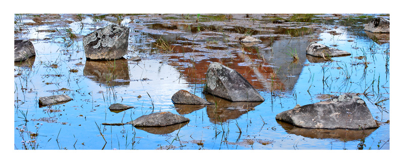 reflections on ricefields