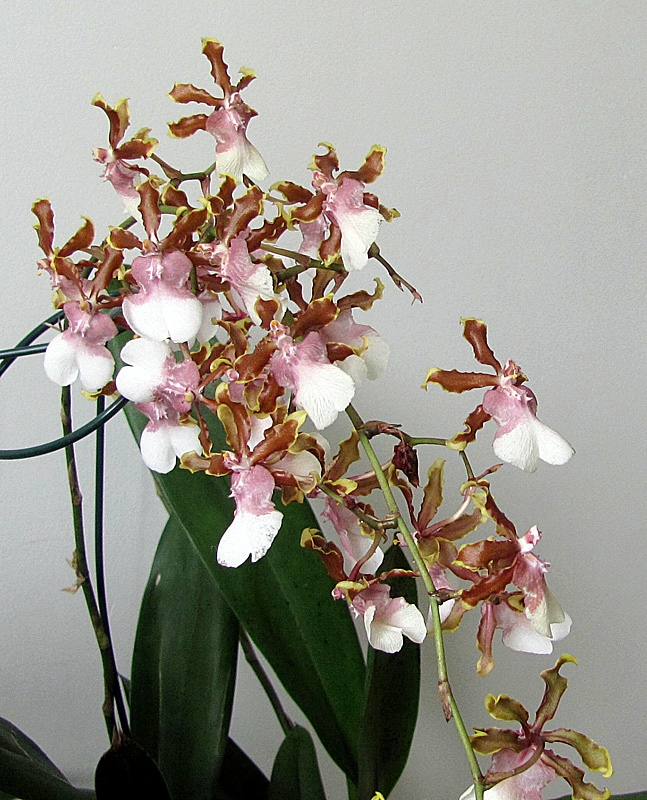 It's time of Orchids
