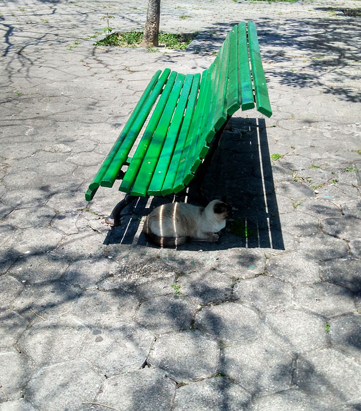 Bench and a cat...