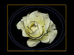 Title: PPWorked rose