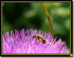 Title: Looking down at a busy bee