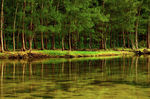 Title: Pine Reflections on a Warm Afternoon Camera: Nikon D-50