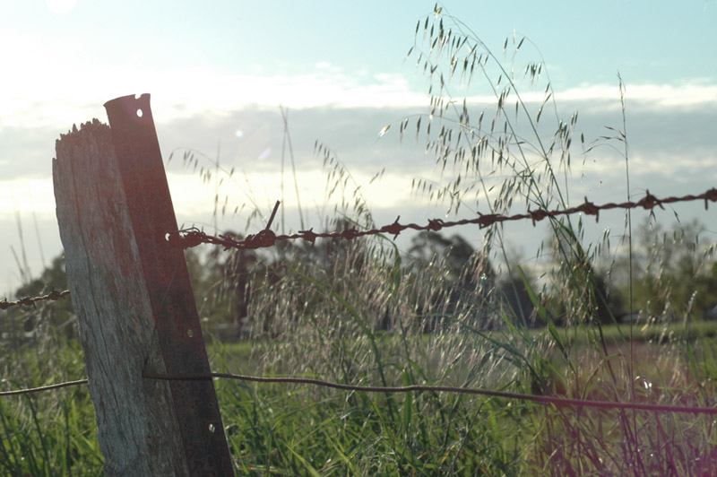Barbed Wire Fences Farm
