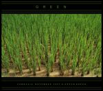 Title: Green for the theme in Cambodia
