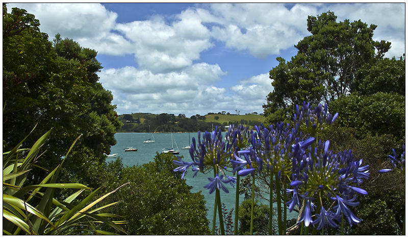A cheerful view of Waiheke