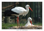 Title: Storks at the Artis ZooNikon D70s