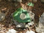 Title: Stone..Leaf..Coin
