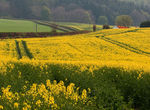 Title: Yellow field at BalmerinoCanon EOS 20D