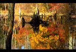 Title: Autumn Reflections