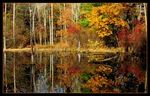 Title: Fall 'Reflections