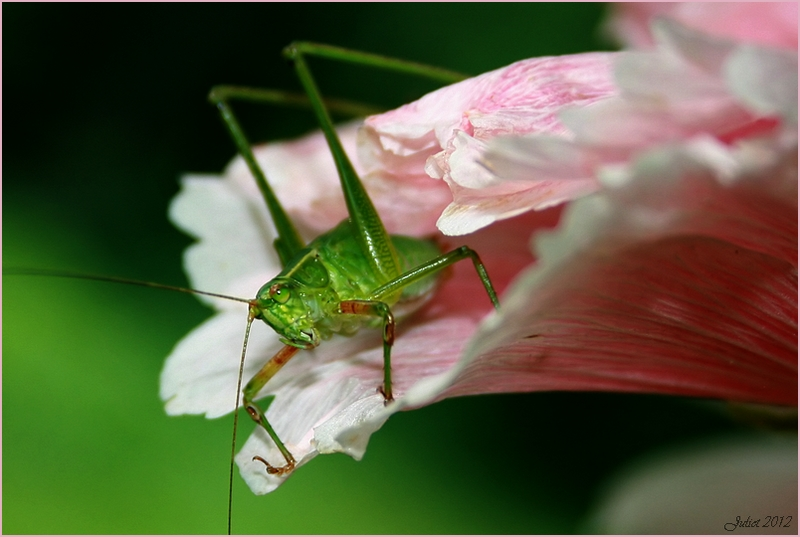 Grasshopper and the flower