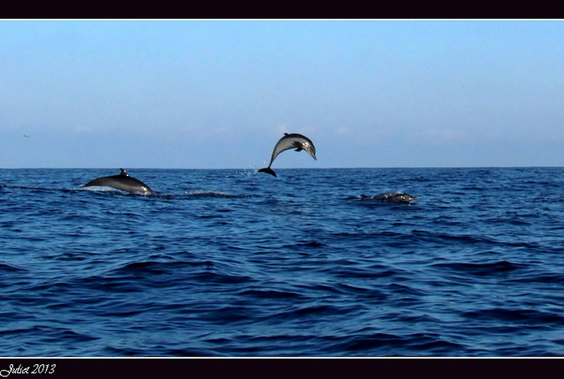 Jumping for Joy- Dolphin