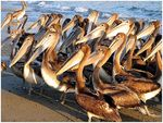 Title: The Pelican Briefing Camera: Canon PowerShot S2 IS