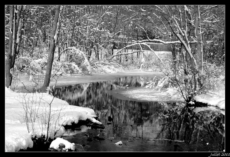 Reflection of Winter