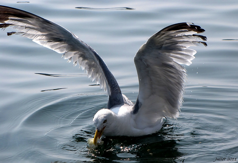 A Seagull's Wings