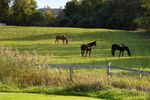 Title: Horses In The FieldPentax *ist DL