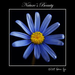 Title: Nature's BeautyOlympus E3 (sold)