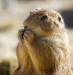 Title: Snack Time in Prairie Dog Town Camera: Canon EOS Digital Rebel XT