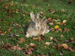 Title: Bunny on the moveOlympus EVOLT E-500