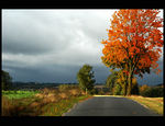 Title: autumn  road
