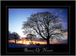 Title: The beauty of nature!!!