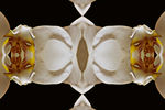 Title: Orchid mirror
