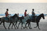 Title: Horses in the beach