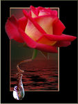 Title: Roses crying in red