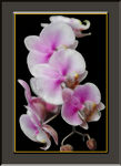 Title: Orchid cascade