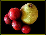 Title: Fruit series today Pear and Plums