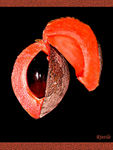 Title: Fruit series today Mamey