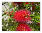 Title: A bottle brush	Panasonic Lumix DMC TZ10