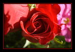 Title: From the bouquet IIINikon D50