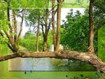 Title: Peace in the river