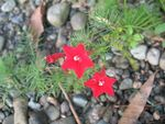 Title: pretty red flowerCanon PowerShot A630